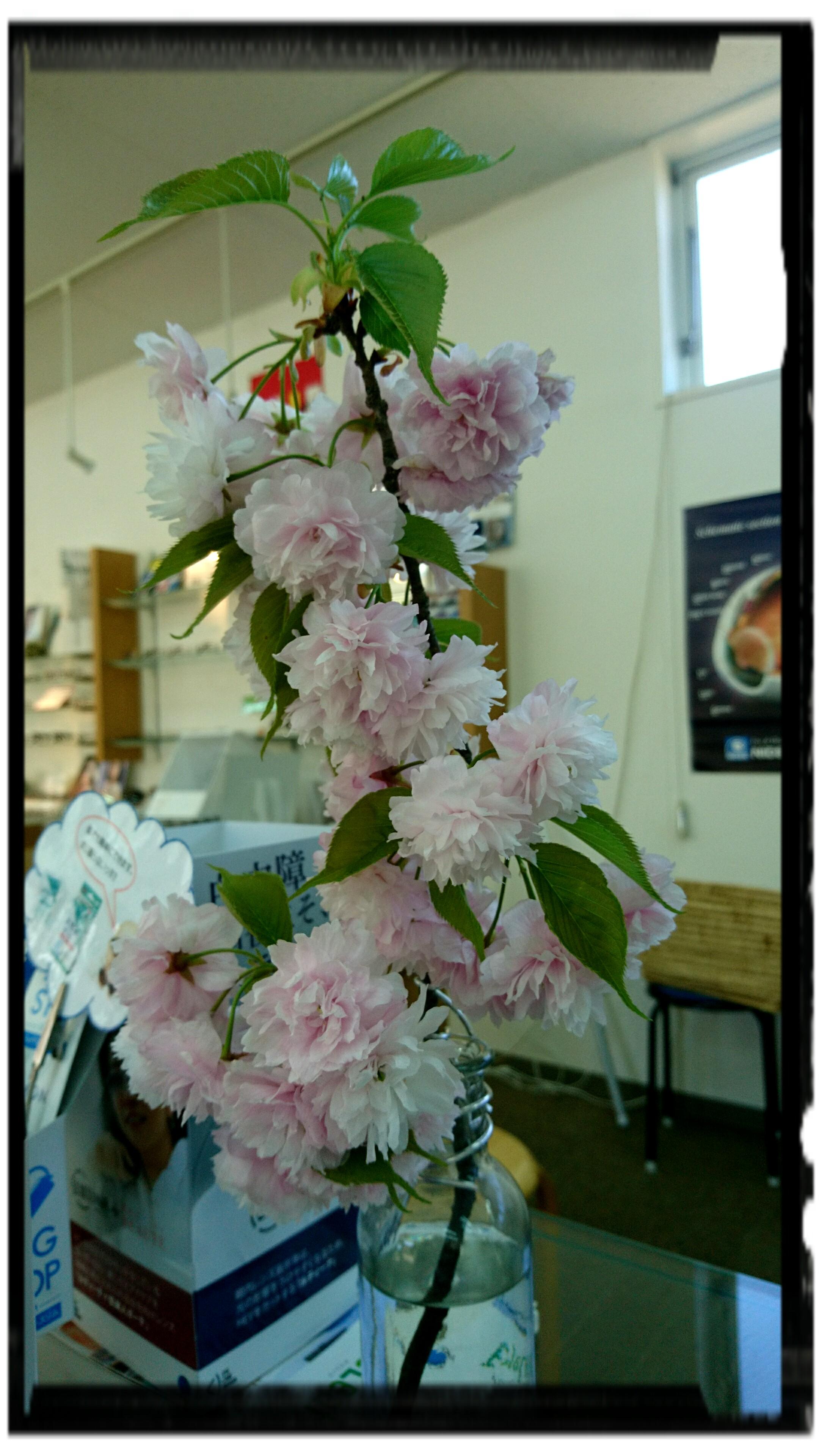 桜② (1)